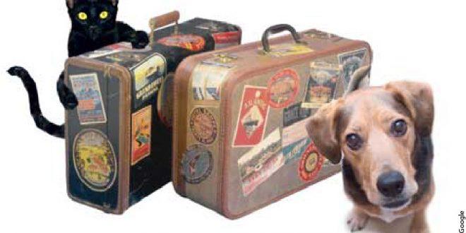 Viajar con mascotas: Requisitos y consejos