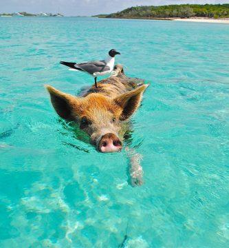 Cayo Big Major Bahamas